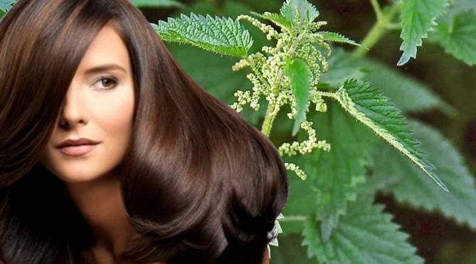 Маски для волос из крапивы рецепты